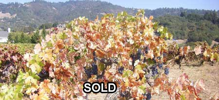 Vineyard sold: Russian River Ranch Property - Reibli Valley Sonoma County